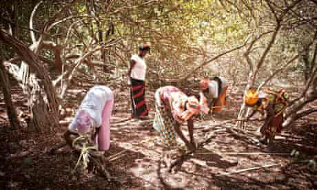 MDG :  Casamance community forest project, Senegal,