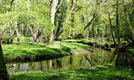 Country Diary : Beaulieu River at Kings Hat, New Forest