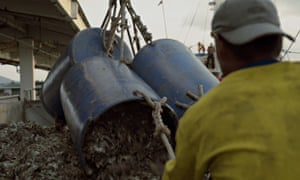 MDG : Seafood industry and slavery in Thailand : Trashfish  for shrimps