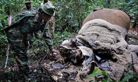Poaching elephant number down in 2013 : two elephants killed by poachers in Kenya