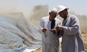 Farmers check grain seeds