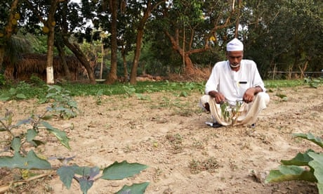 Bangladeshi farmers caught in row over $600,000 GM aubergine trial