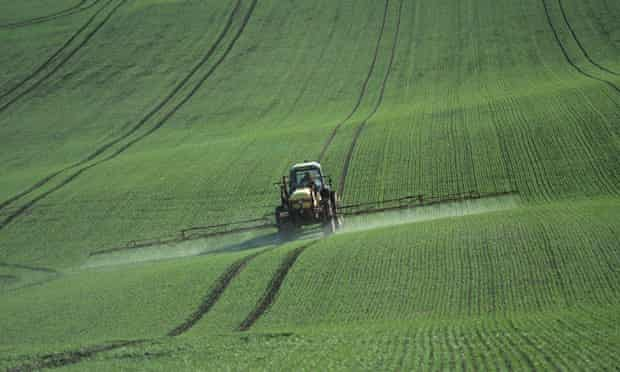 Pesticide residues in bread : Tractor spraying a young wheat crop in autumn