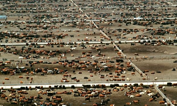 Giving up beef will reduce carbon footprint more than cars, says expert | Environment | The Guardian