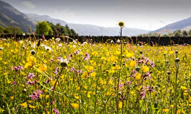 George Monbiot blog : Wild Flower Hay Meadows Seen At Lake District National Park, England
