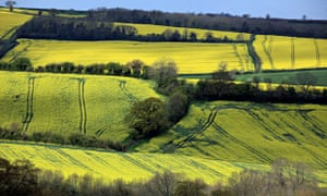 MDG : Rapeseed blooms in a field close to the village of Priston