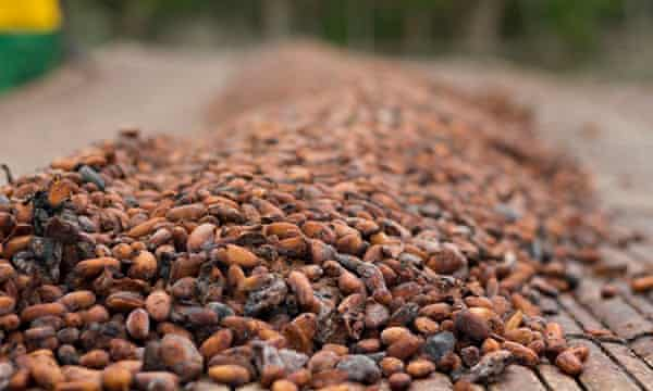 MDG : Smuggling cocao from Ghana to Ivory Coat : Cocoa beans dry in the sun in Adonikrom