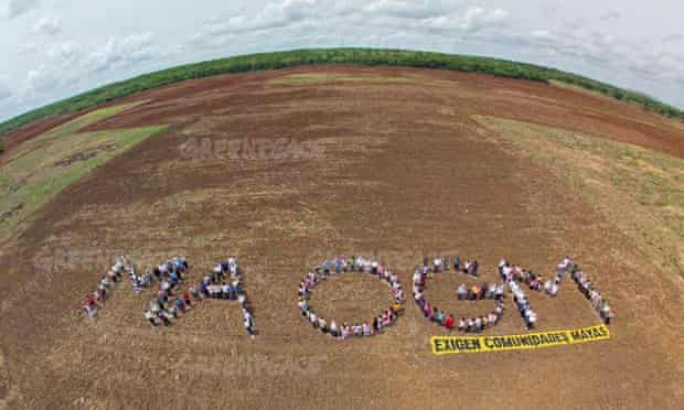 MDG : Monsanto GM soya impact on honey bees protest in Yucatan Peninsula in mexico