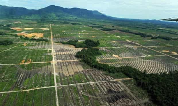 MDG : Logging and Deforestation in Borneo, Indonesia : Sinar Mas plantation