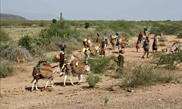 MDG : Turkana Aquifer : pastoralists migrating to Lotikipi in search of pasture and water