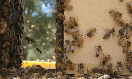 Still from Vanishing of the Bees (2009)