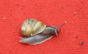 Cannes film festival day8: A snail on the red carpet at the 63rd Cannes film festival