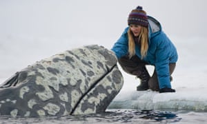 Drew Barrymore in Big Miracle.