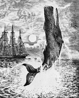 Leviathan: Moby-Dick illustration
