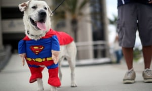 Comic-Con: Superman dog