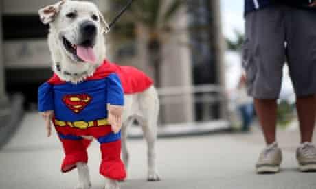 Comic-Con: Superman dog