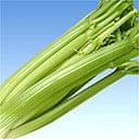 Some celery, yesterday