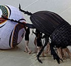 World Cup opening ceremony - dung beetle