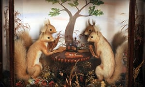 Victorian taxidermy squirrels