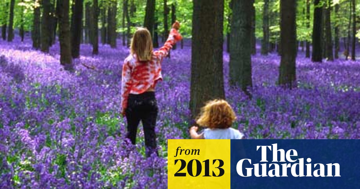 Bluebell woods under threat, experts warn | Environment | The Guardian