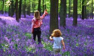 ashridge bluebells children