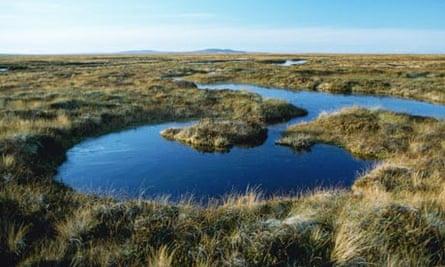 Highland Peat Bog