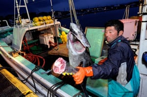 Gallery Catching tuna in Japan: Catching tuna in Japan