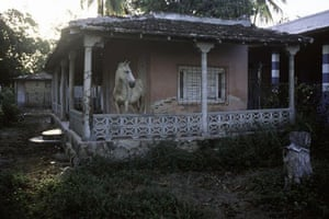 Gallery Magnum's Cuba: A horse on a porch