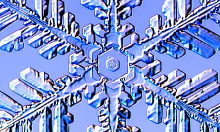 A Fernlike Stellar Dendrite snowflake