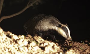 nocturnal animals free stream