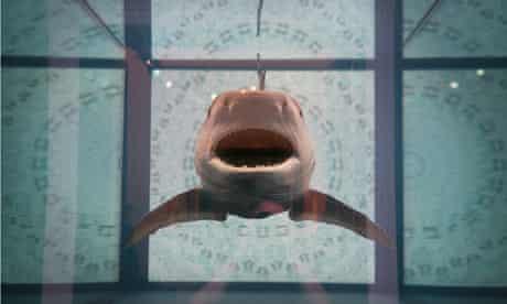 SAC shark