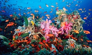 A tropical coral reef off Fiji