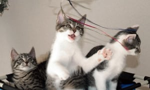 cat plays with string
