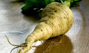A freshly pulled parsnip