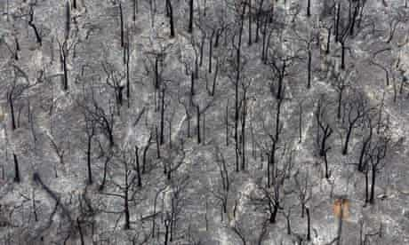 Kinglake, Australia: Trees that were destroyed by fire