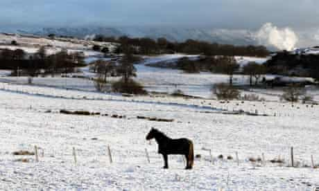 A horse stands in a snow covered field in Denny, Scotland