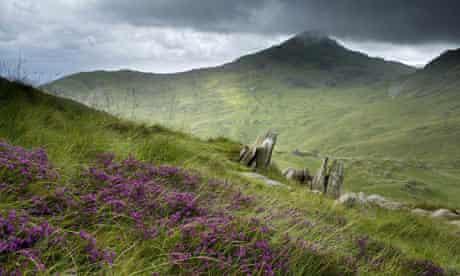 Heather and rock outcrops on Hafod Y Llan farm, Snowdonia