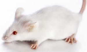 White-Mouse-001.jpg?w=300&q=55&auto=format&usm=12&fit=max&s=f50b15f7f5ab1985fbb43147d14f4092