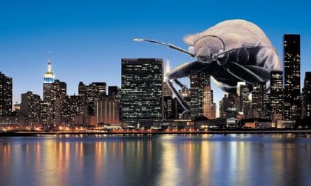 bedbugs new york