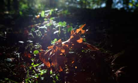 Autumn scenes in a forest in Hoxne, Suffolk