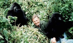 SHOWBIZ Gorilla/Attenborough
