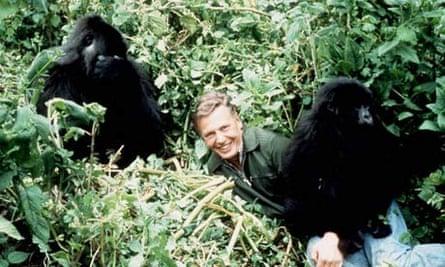 SHOWBIZ Gorilla/Attenborough