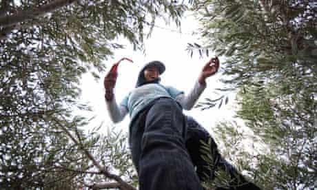 fairtrade olive farmers