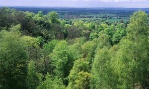 british woodland