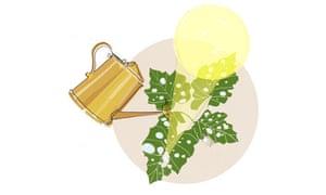 gardening illustration 2