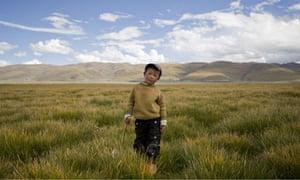 tibet boy new