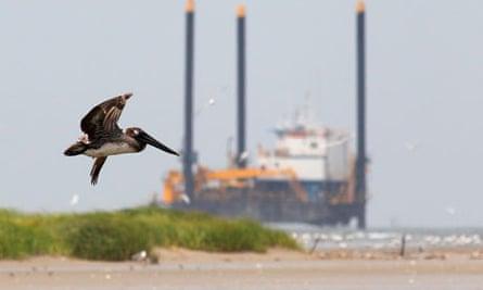 A pelican flies near a Deepwater Horizon plant