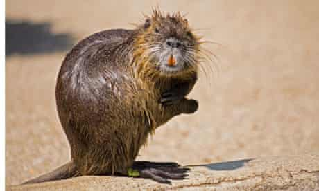 A water rat: perfect for those winter nights