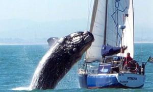 Moby Dick terrorises sailors