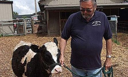 Richard Gradwohl with a miniature Holstein